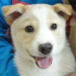 日本ドッグトレーナー協会_保護犬_デール