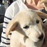 日本ドッグトレーナー協会_保護犬支援プロジェクト_保護犬_カーラ
