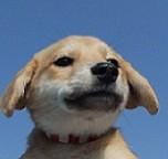 日本ドッグトレーナー協会_保護犬支援プロジェクト_保護犬_ベガ