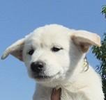 日本ドッグトレーナー協会_保護犬支援プロジェクト_保護犬_ミラ