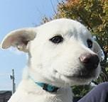 日本ドッグトレーナー協会_保護犬支援プロジェクト_保護犬_ラナ