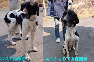 日本ドッグトレーナー協会保護犬支援プロジェクト_保護犬レポート_太斗②-1