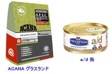 日本ドッグトレーナー協会保護犬支援プロジェクト_保護犬レポート_太斗②-2