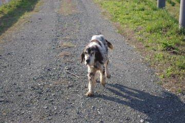 日本ドッグトレーナー協会保護犬支援プロジェクト_保護犬レポート_元①-1