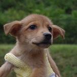 日本ドッグトレーナー協会__保護犬情報_紅葉