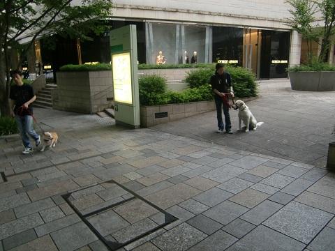 日本ドッグトレーナー協会_保護犬プロジェクト_保護犬レポート_エール_7-3