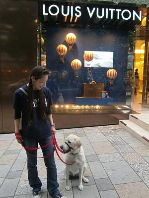 日本ドッグトレーナー協会_保護犬プロジェクト_保護犬レポート_エール_7-1