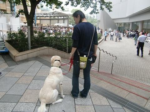 日本ドッグトレーナー協会_保護犬プロジェクト_保護犬レポート_エール_7-2