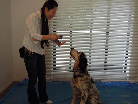 日本ドッグトレーナー協会_保護犬支援プロジェクト_活動レポート_元「おすわり・まて」
