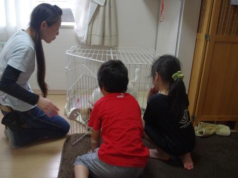 日本ドッグトレーナー協会_保護犬支援プロジェクト_デール4-2