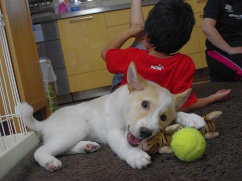 日本ドッグトレーナー協会_保護犬支援プロジェクト_デール4-3