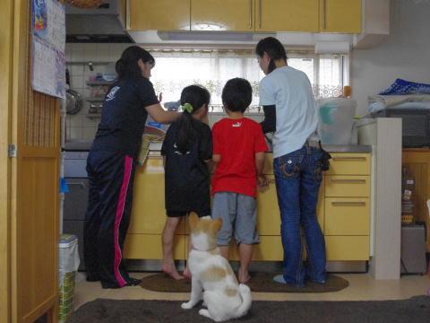 日本ドッグトレーナー協会_保護犬支援プロジェクト_デール4-4
