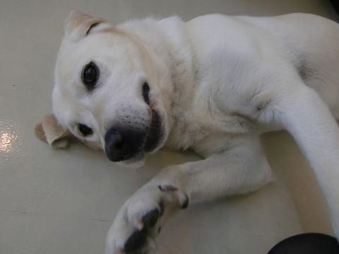 日本ドッグトレーナー協会_保護犬支援プロジェクト_保護犬レポート_エール6-1