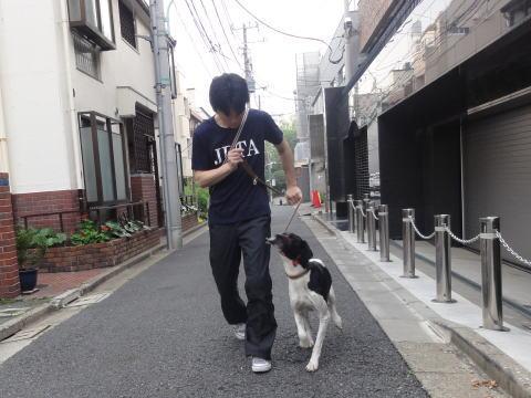 日本ドッグトレーナー協会_保護犬支援プロジェクト_保護犬レポート_太斗6-1