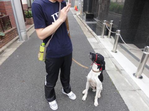 日本ドッグトレーナー協会_保護犬支援プロジェクト_保護犬レポート_太斗6-2