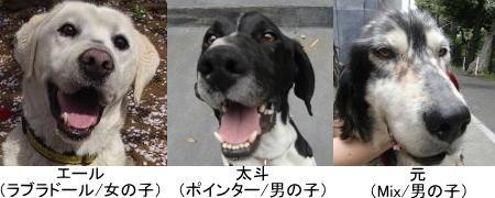 被災保護犬の里親募集について