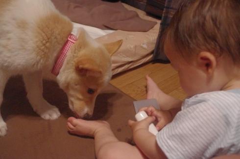 日本ドッグトレーナー協会保護犬支援プロジェクト_保護犬レポート_デール③