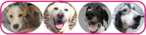 jdta_dog_adopt_event