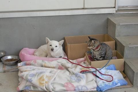 日本ドッグトレーナー協会_保護犬支援プロジェクト_活動報告7.24-1