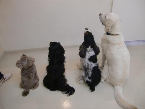 日本ドッグトレーナー協会_保護犬支援プロジェクト_活動報告7.24-3