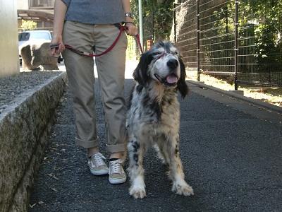 日本ドッグトレーナー協会_保護犬レポート_元7.14-3