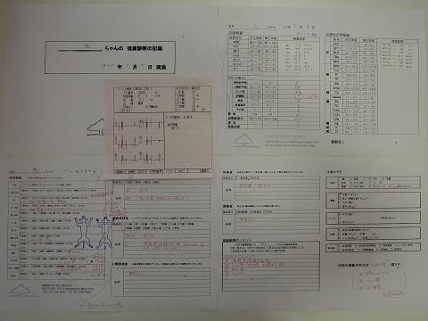 日本ドッグトレーナー協会_保護犬レポート_元7.7-1