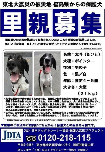 日本ドッグトレーナー協会_保護犬レポート_太斗7.21-1