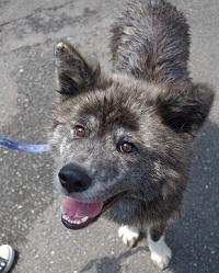 日本ドッグトレーナー協会_保護犬_BUZZ
