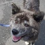 日本ドッグトレーナー協会_保護犬支援プロジェクト_BUZZ