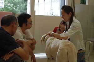 日本ドッグトレーナー協会_保護犬支援プロジェクト_保護犬レポート_エール7.26-1
