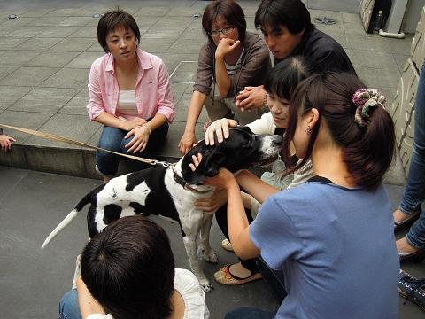 日本ドッグトレーナー協会_保護犬レポート_太斗0818-1