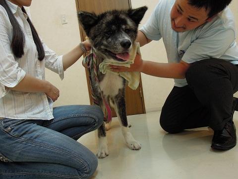 日本ドッグトレーナー協会_保護犬レポート_BUZZ0824-1