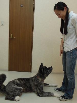 日本ドッグトレーナー協会_保護犬レポート_BUZZ0824-2