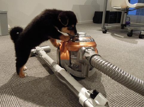 日本ドッグトレーナー協会_保護犬レポート_福結0826-2