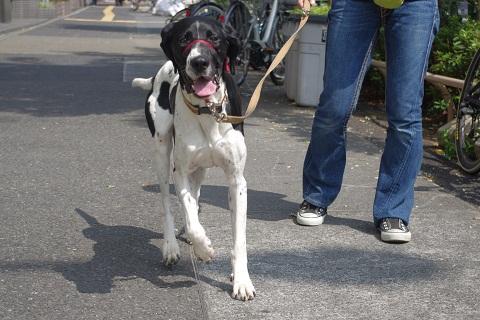日本ドッグトレーナー協会_保護犬レポート_太斗0809-2