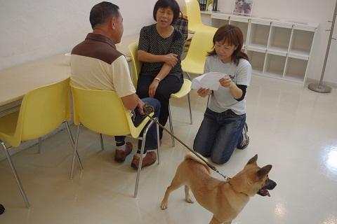 日本ドッグトレーナー協会_保護犬レポート_チップ&デール0820-3