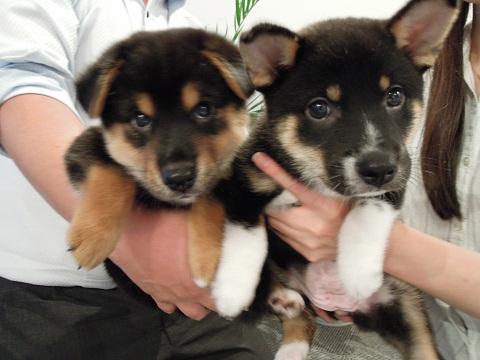 日本ドッグトレーナー協会_保護犬レポート_福結0906-1