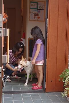 日本ドッグトレーナー協会_保護犬レポート_デール0925-7