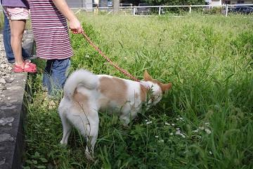 日本ドッグトレーナー協会_保護犬レポート_デール0925-4
