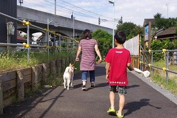 日本ドッグトレーナー協会_保護犬レポート_デール0925-3