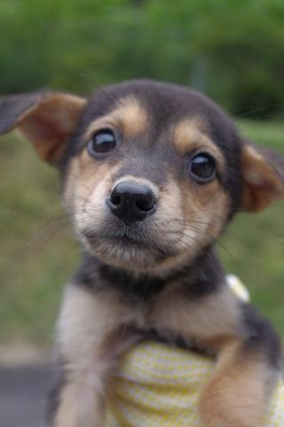 日本ドッグトレーナー協会_保護犬_杏