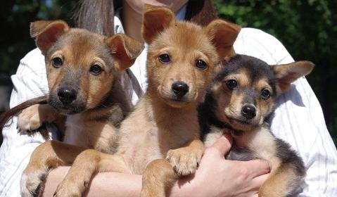日本ドッグトレーナー協会_保護犬レポート_紅葉・楓・杏0929-1