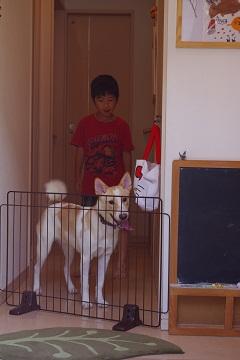 日本ドッグトレーナー協会_保護犬レポート_デール0925-6