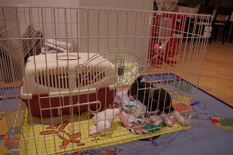 日本ドッグトレーナー協会_保護犬レポート_結0924-2