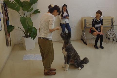 日本ドッグトレーナー協会_保護犬レポート_BUZZ0922-3
