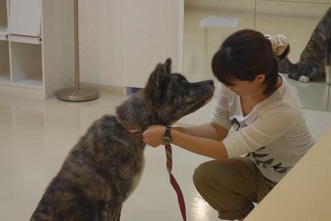 日本ドッグトレーナー協会_保護犬レポート_BUZZ0922-2