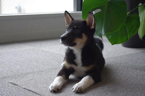 日本ドッグトレーナー協会_保護犬レポート_結0924-1