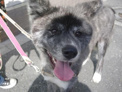 日本ドッグトレーナー協会_保護犬レポート_BUZZ0909-2