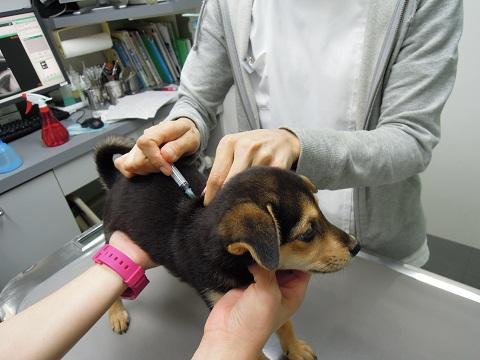 日本ドッグトレーナー協会_保護犬レポート_紅葉・楓・杏1009-3