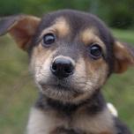 日本ドッグトレーナー協会_保護犬レポート_保護犬情報_杏1013